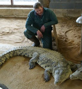 Andy Johnson with the crocodiles